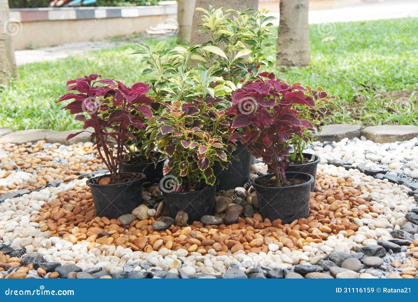 Jardim Pequeno Decorado Com Seixo Imagens de Stock Royalty ...
