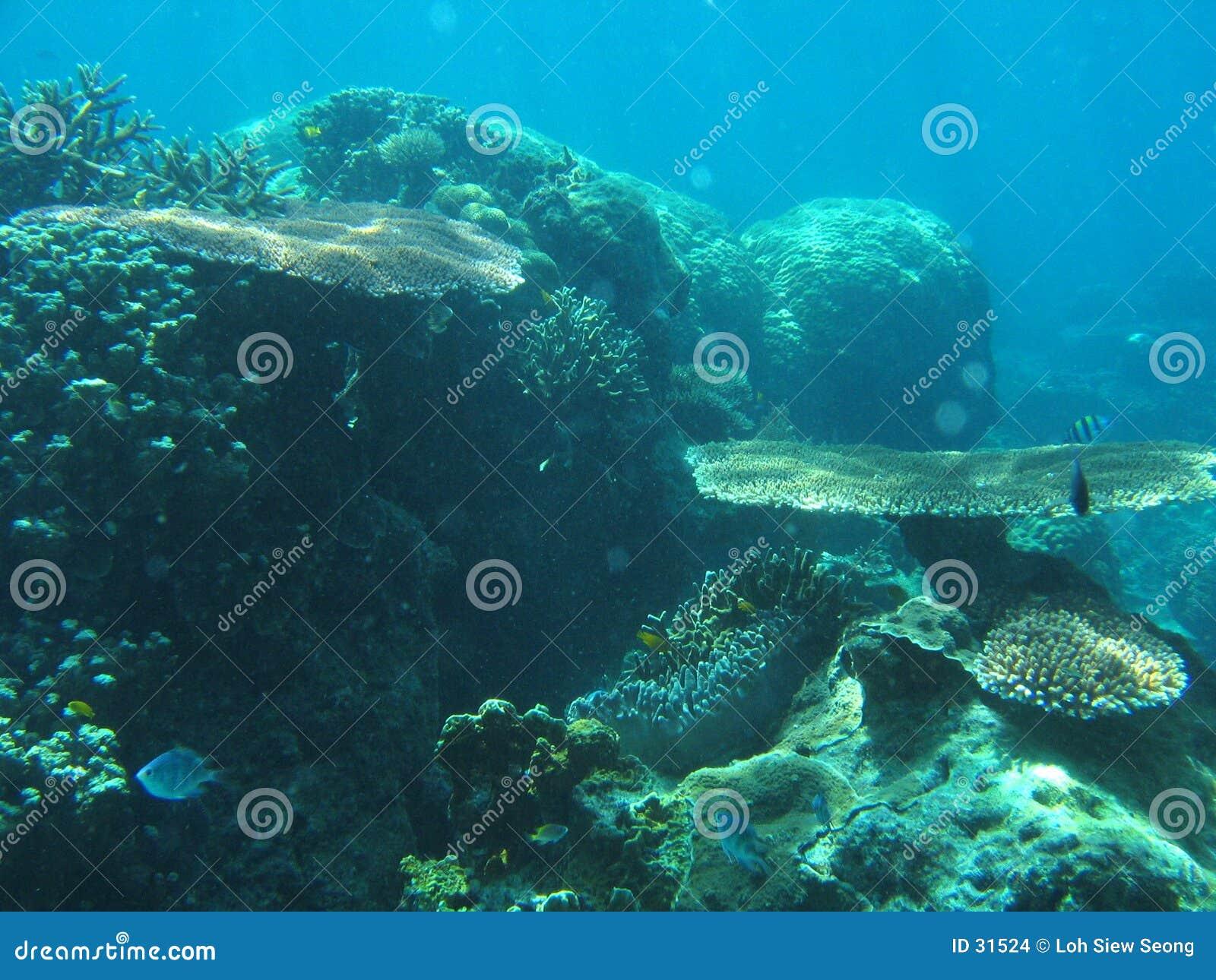 Jardim subaquático