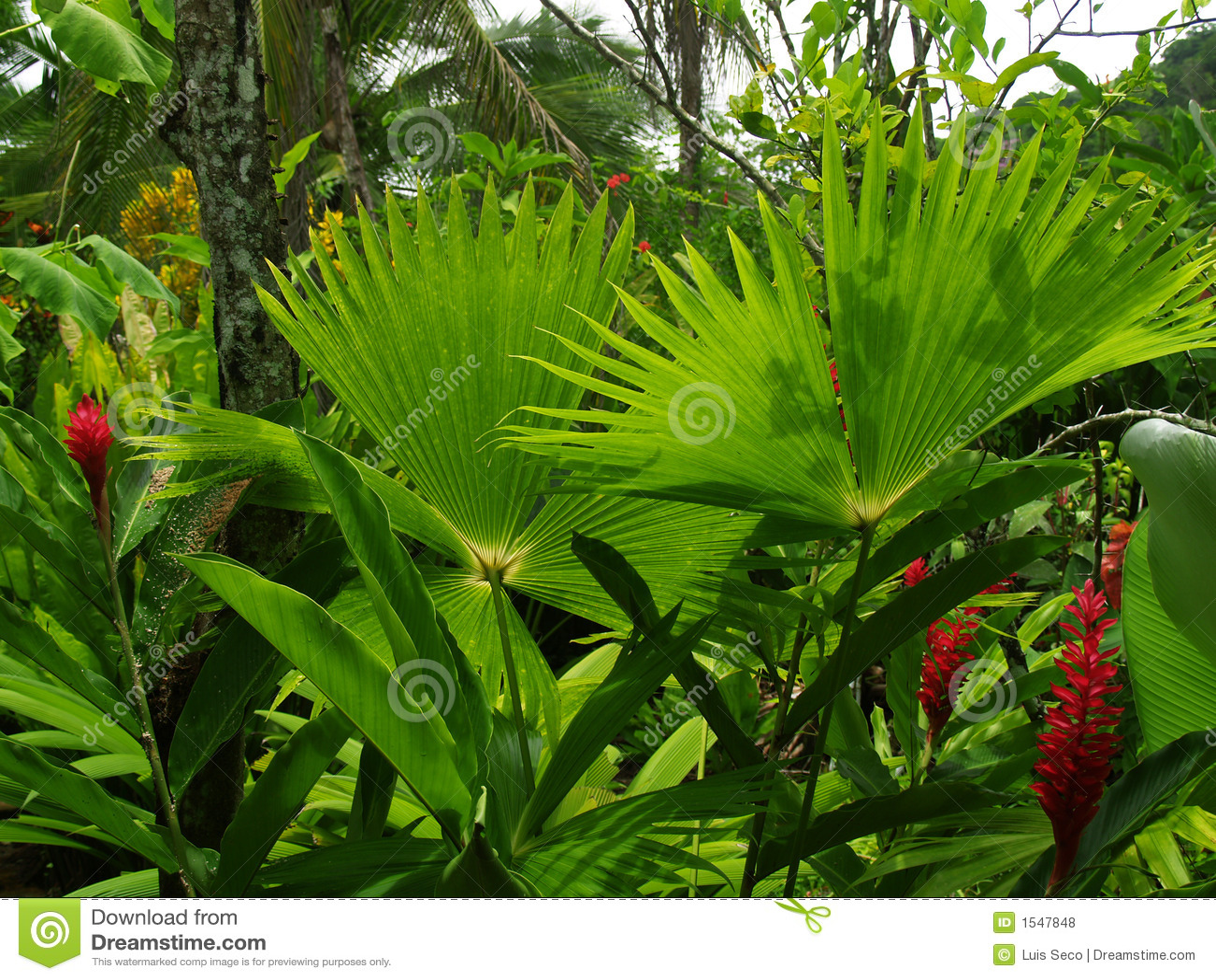 Fotos de Stock Royalty Free Jardim tropical