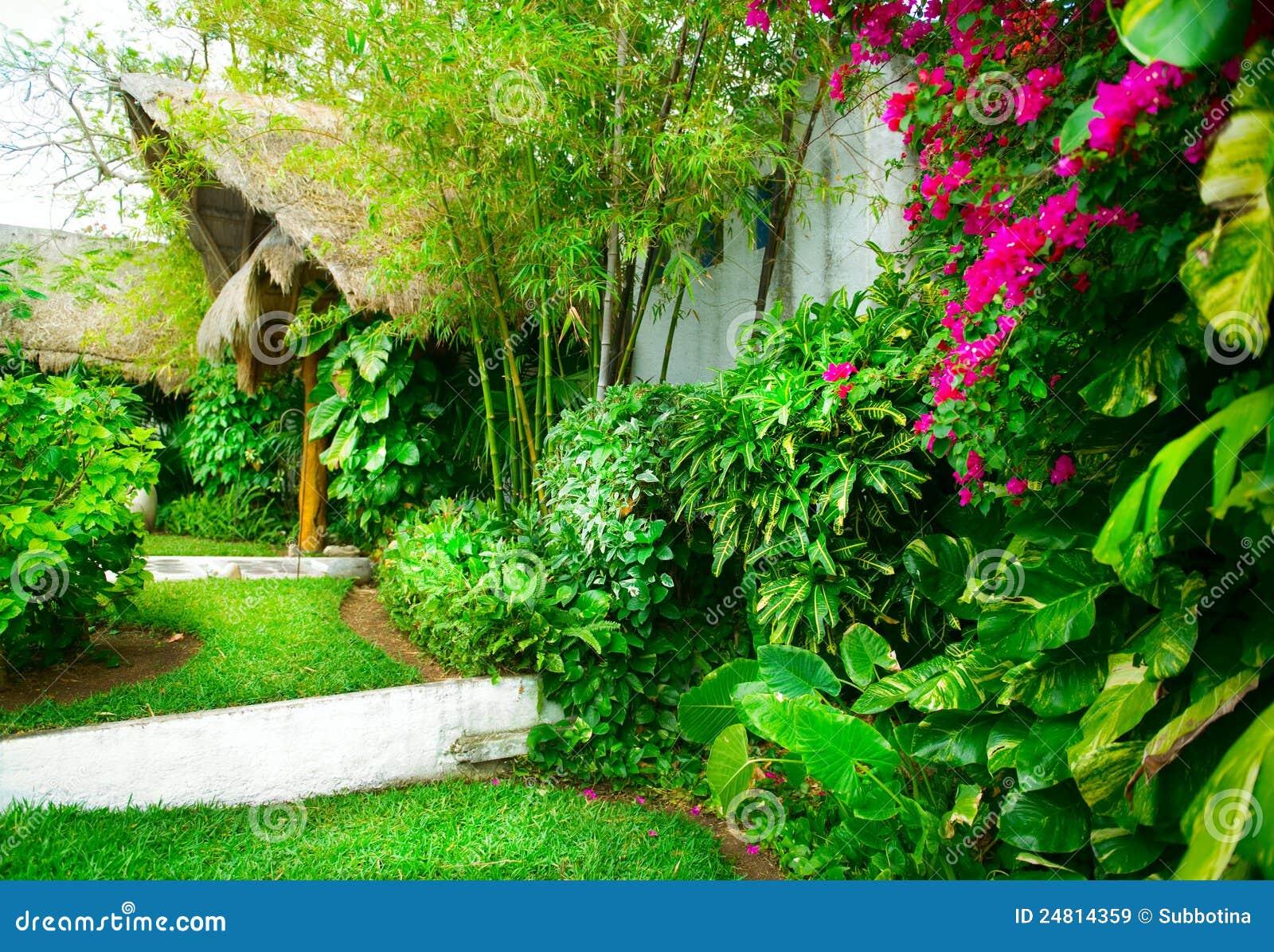 Jardim Tropical Imagens de Stock Royalty Free  Imagem 24814359
