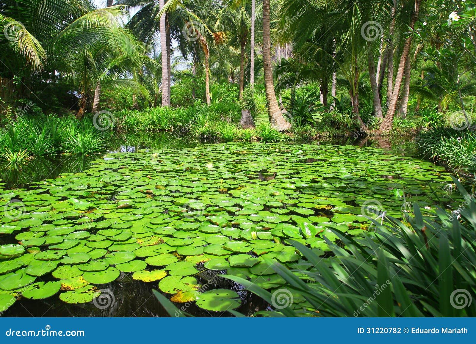 fotos de jardim tropical : fotos de jardim tropical:Jardim tropical asiático com lago pequeno e Lily Pads