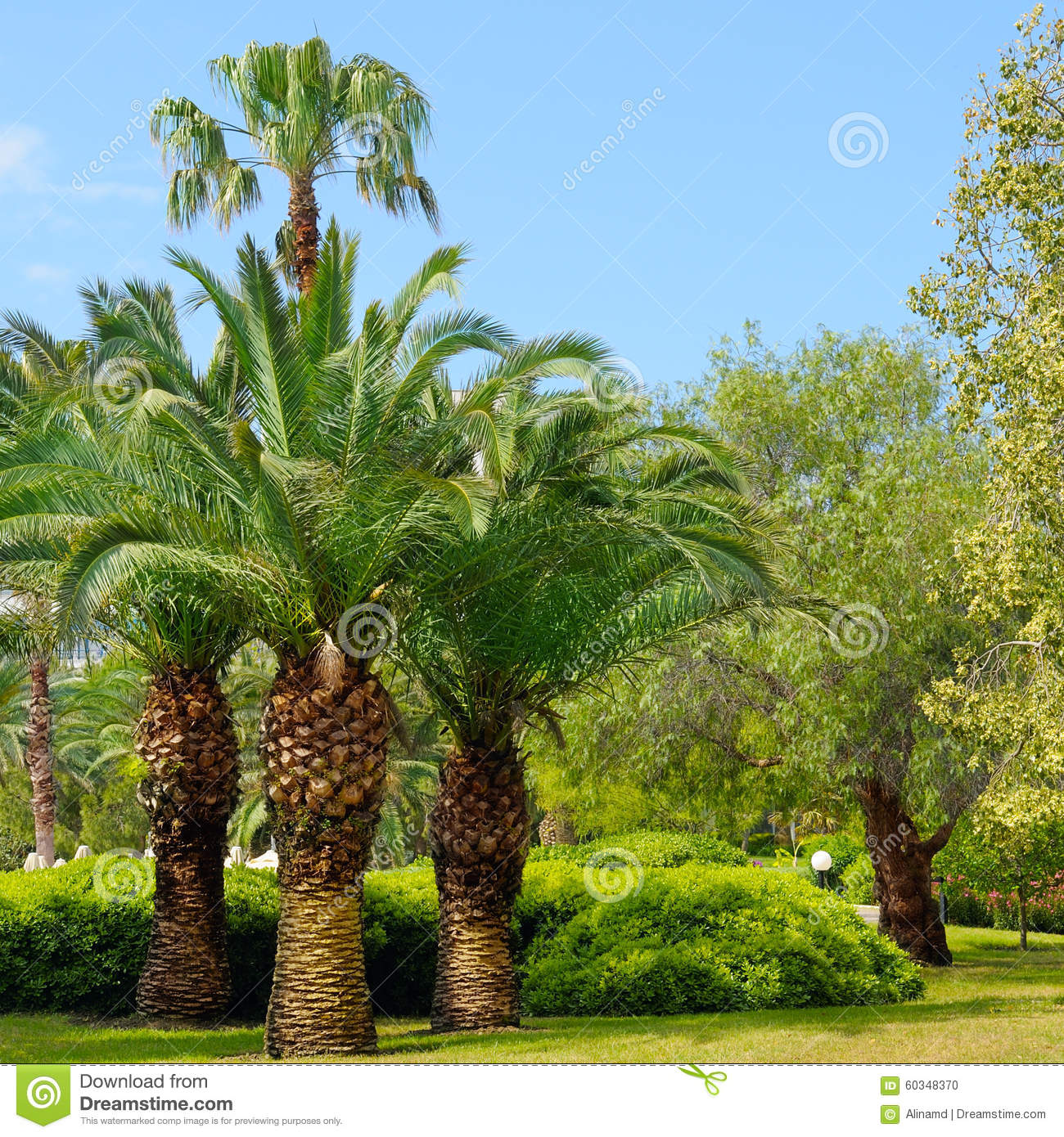 fotos de jardim tropical : fotos de jardim tropical:Tropical Garden with Palm Trees