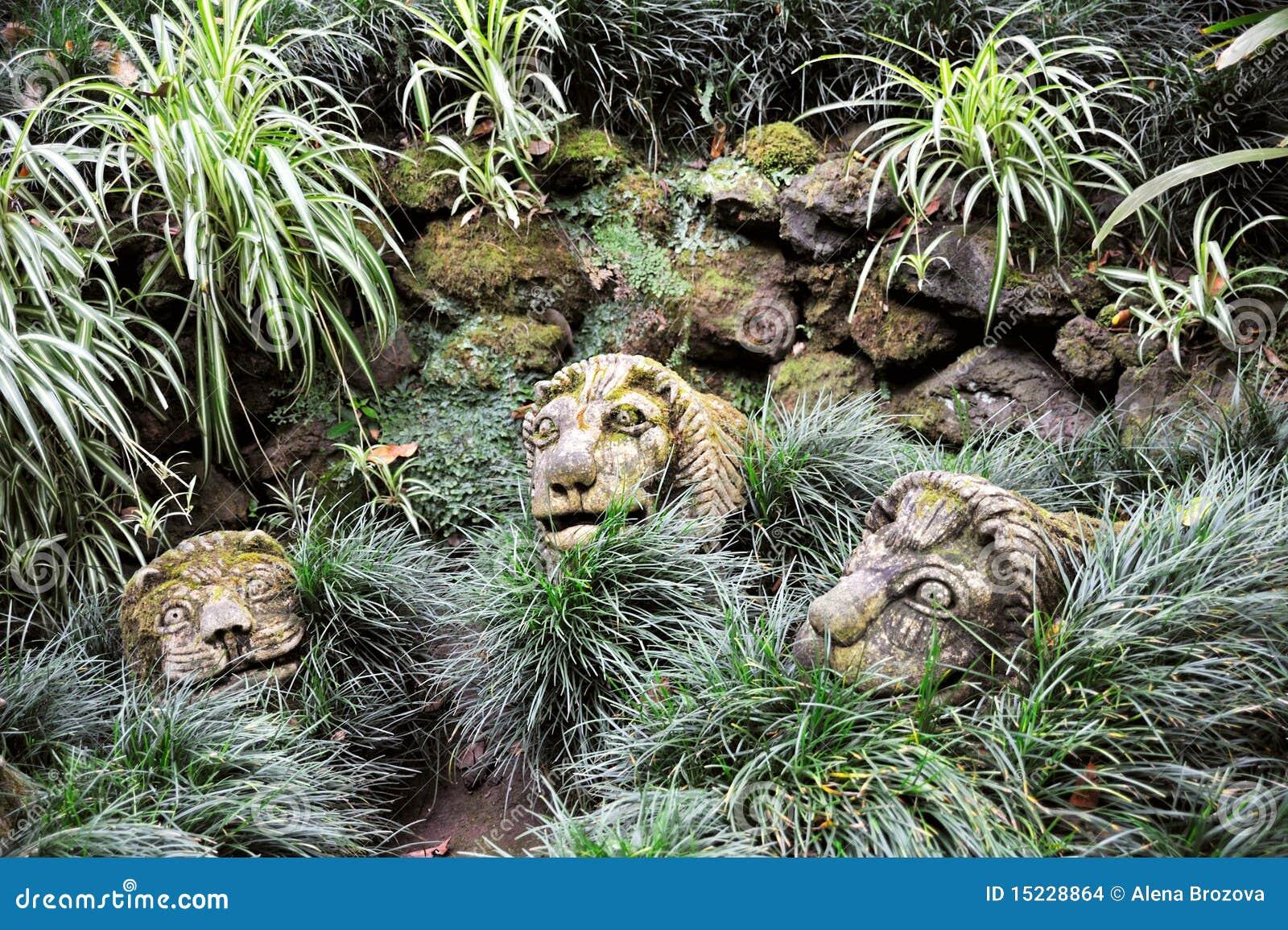 imagens de jardim tropical:Jardim tropical Monte do palácio de Monte, Madeira.