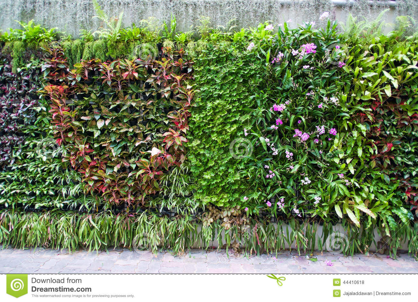 plantas jardim tropical:Tropical Garden Plants and Flowers