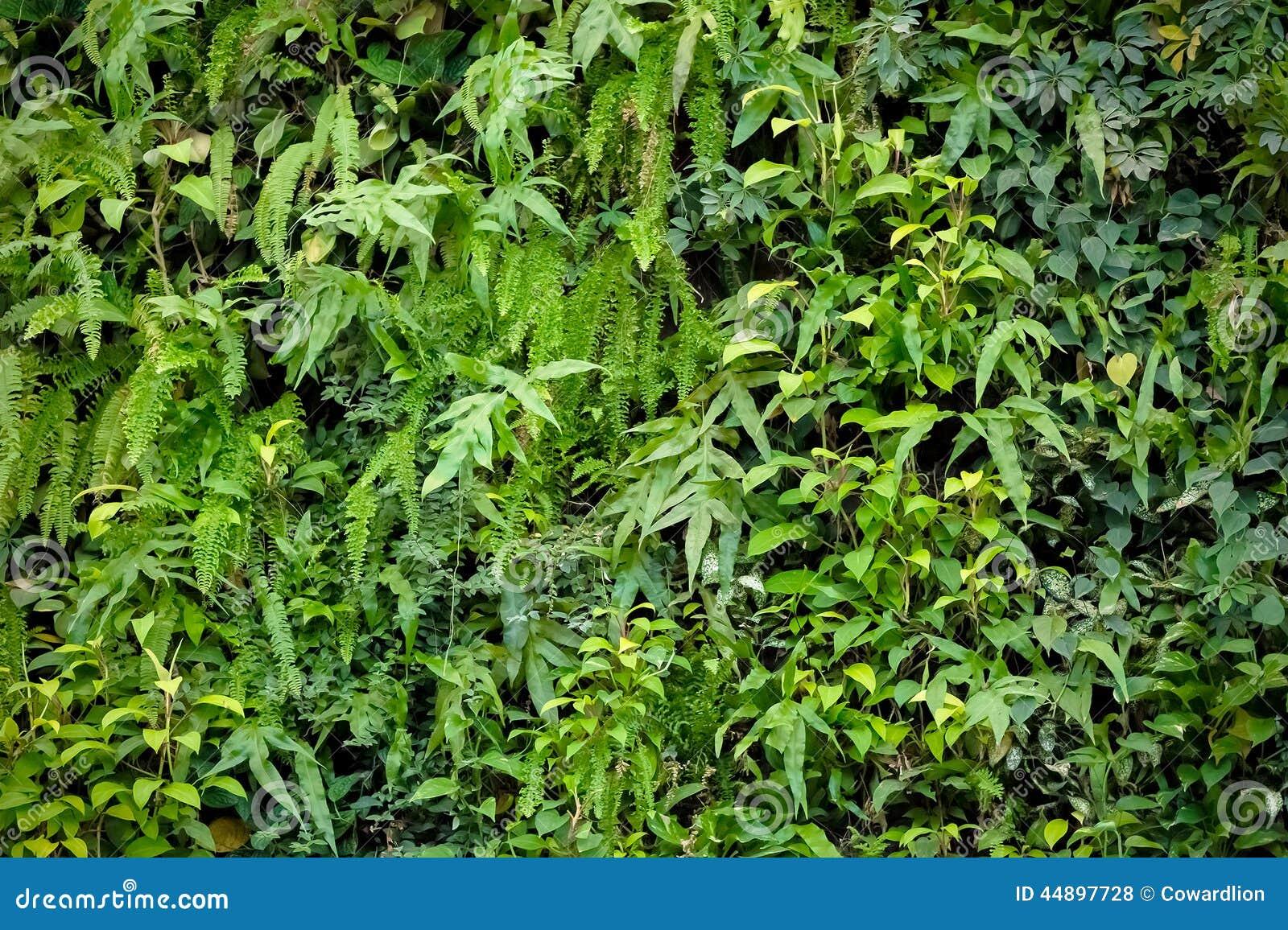 fotos jardim vertical : fotos jardim vertical:Vertical Garden