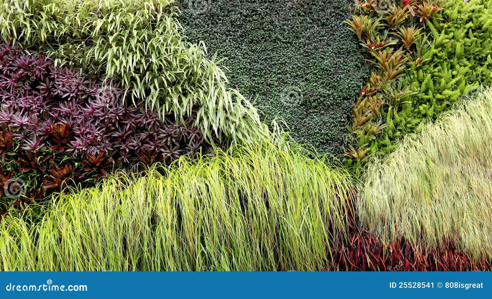 plantas jardim tropical:Jardim vertical com as várias plantas tropicais que crescem em um