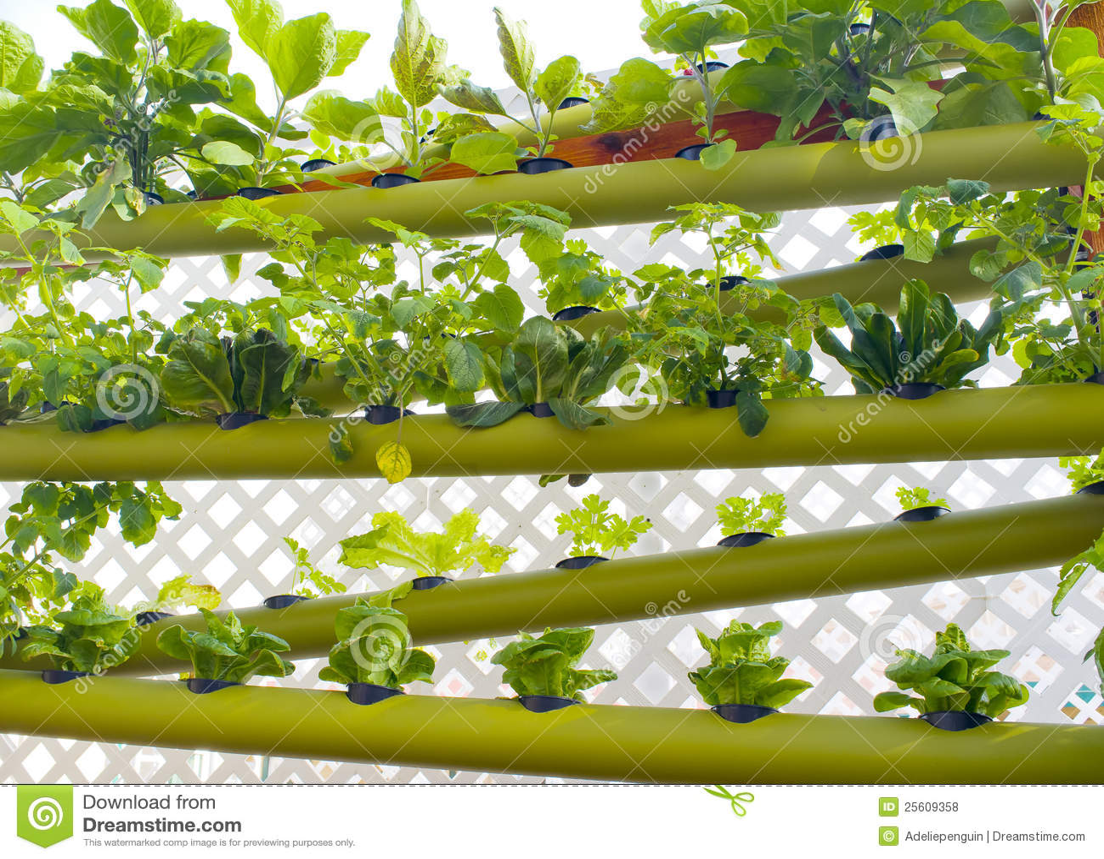 Jardim vertical hidropónico da terra