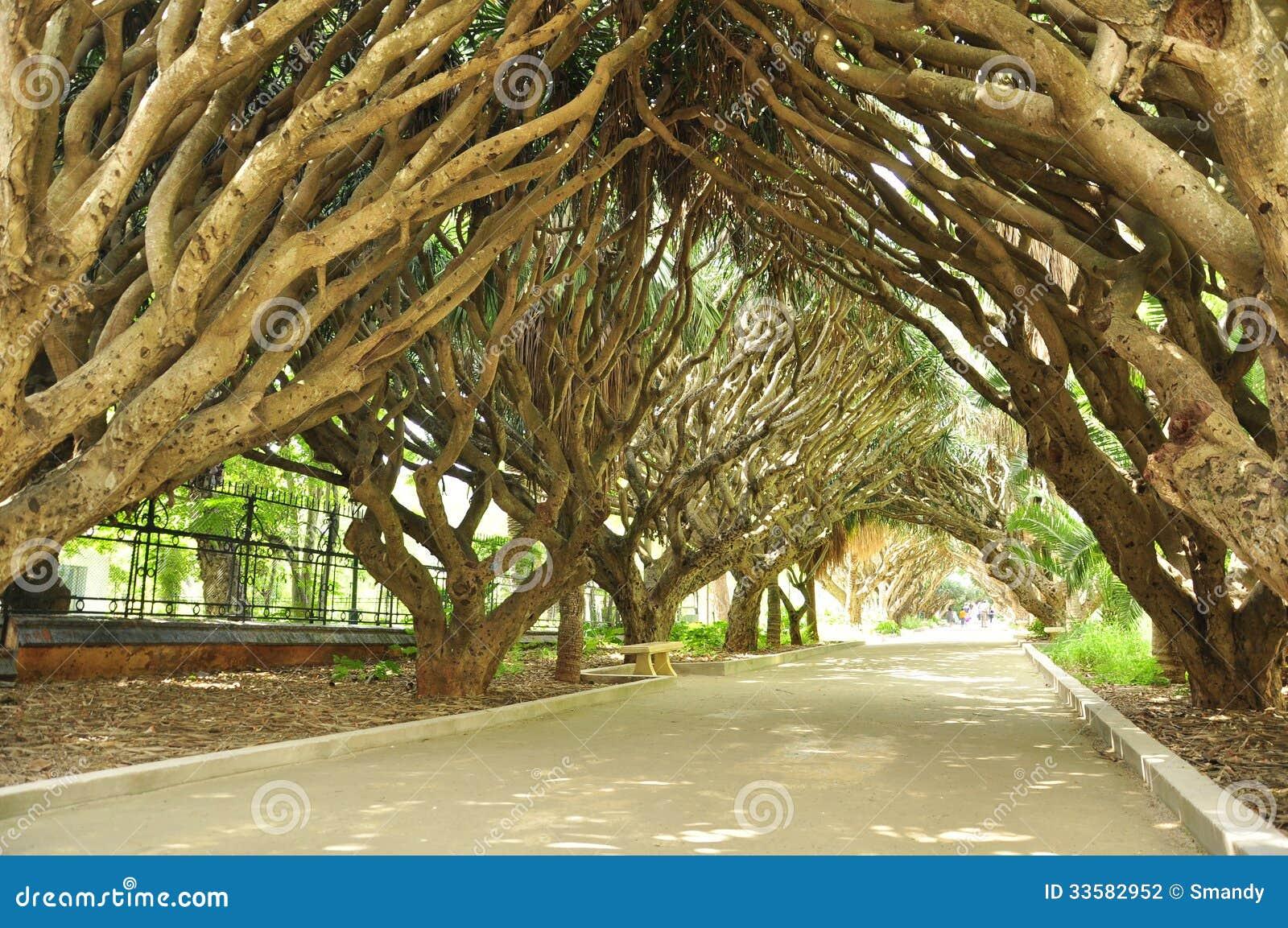 Jardin étonnant Dans Alger Photo Stock Image Du Jardinage 33582952