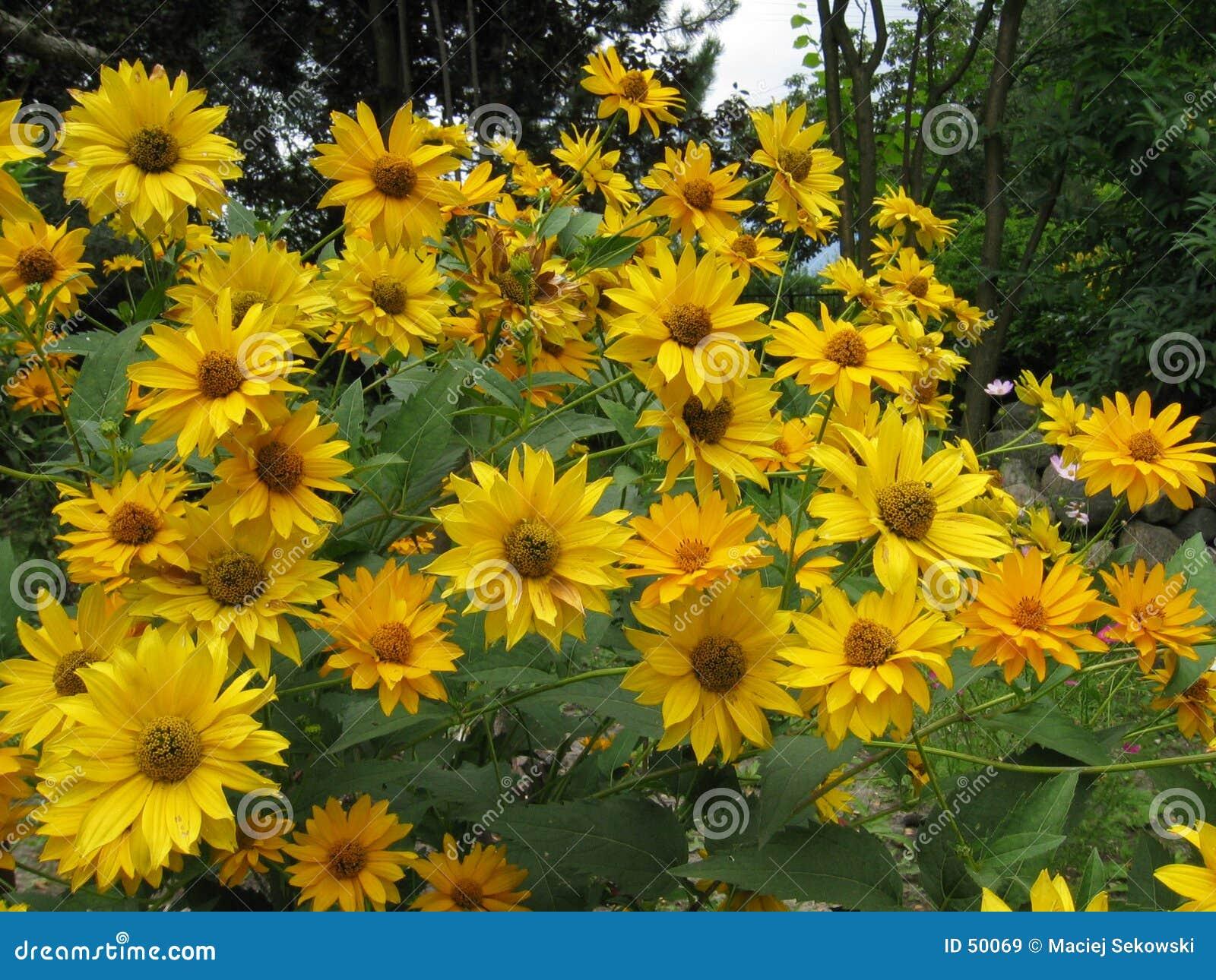 Download Jardin image stock. Image du humide, weather, nature, centrale - 50069