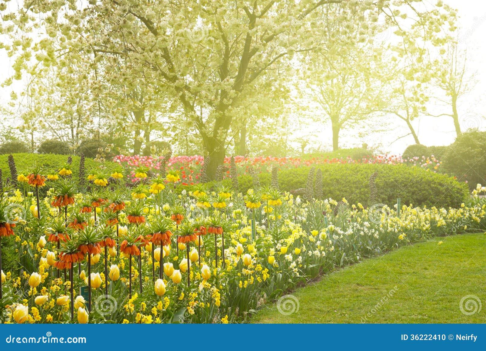 Jardin avec la floraison arbre et fleurs photo stock for Jardin et fleurs