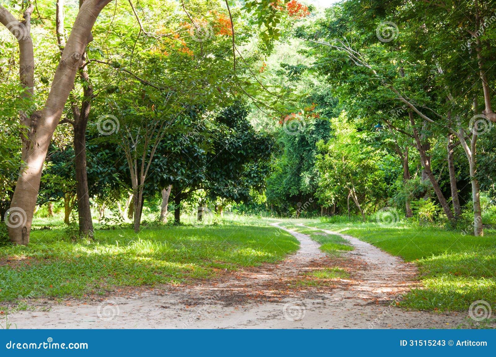 Jardin avec la pelouse et les arbres image stock image for Les arbres du jardin