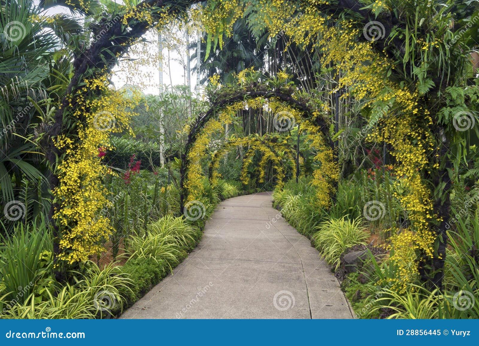 Jardin botanique singapour photo libre de droits image for Jardin botanique singapour