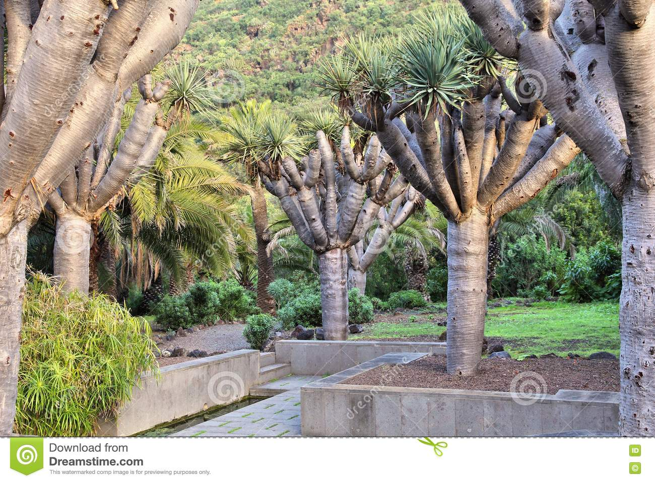 Jardin canario stock image image of travel canary for Jardin canario