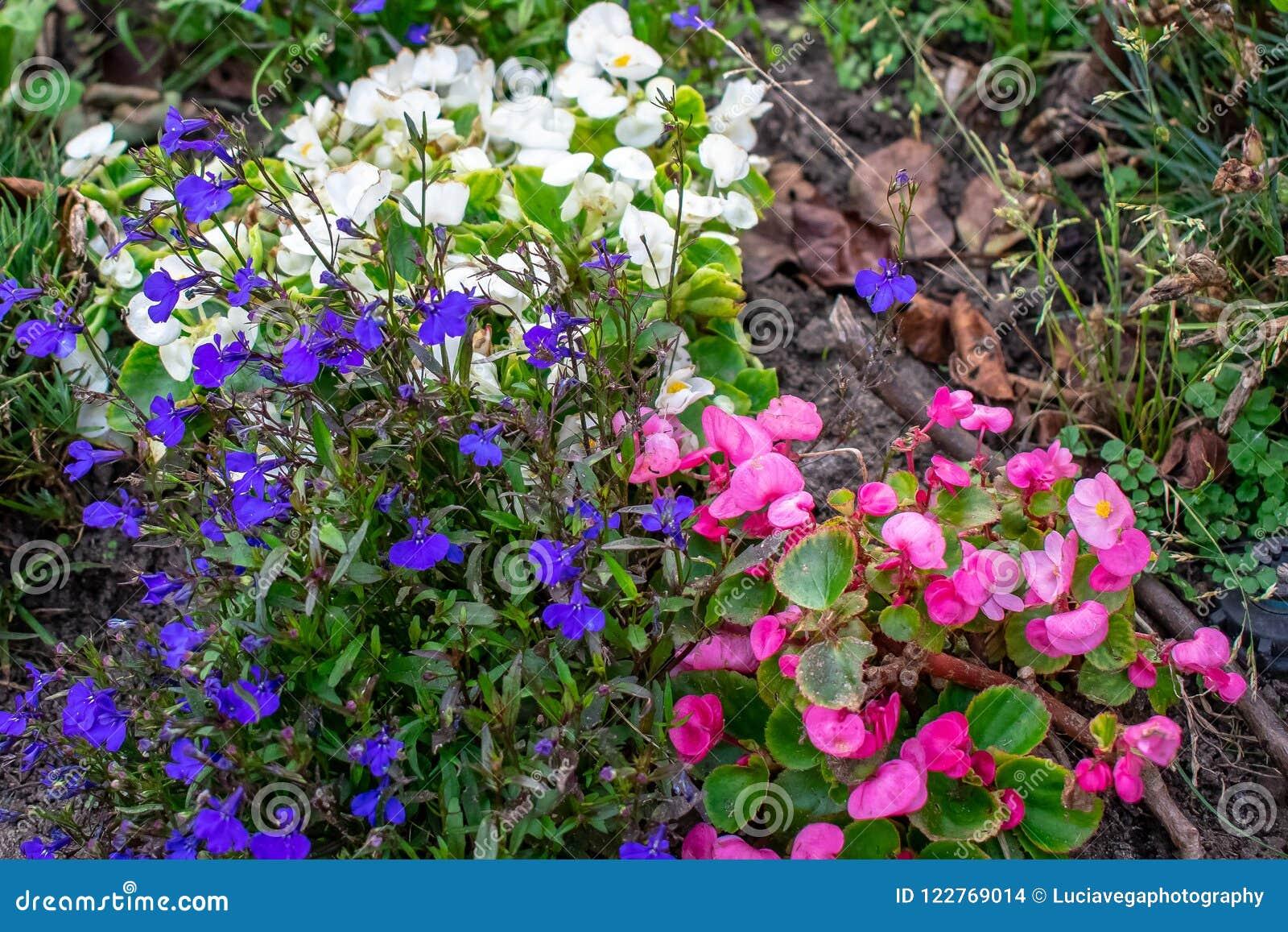 Jardin complètement de petites fleurs