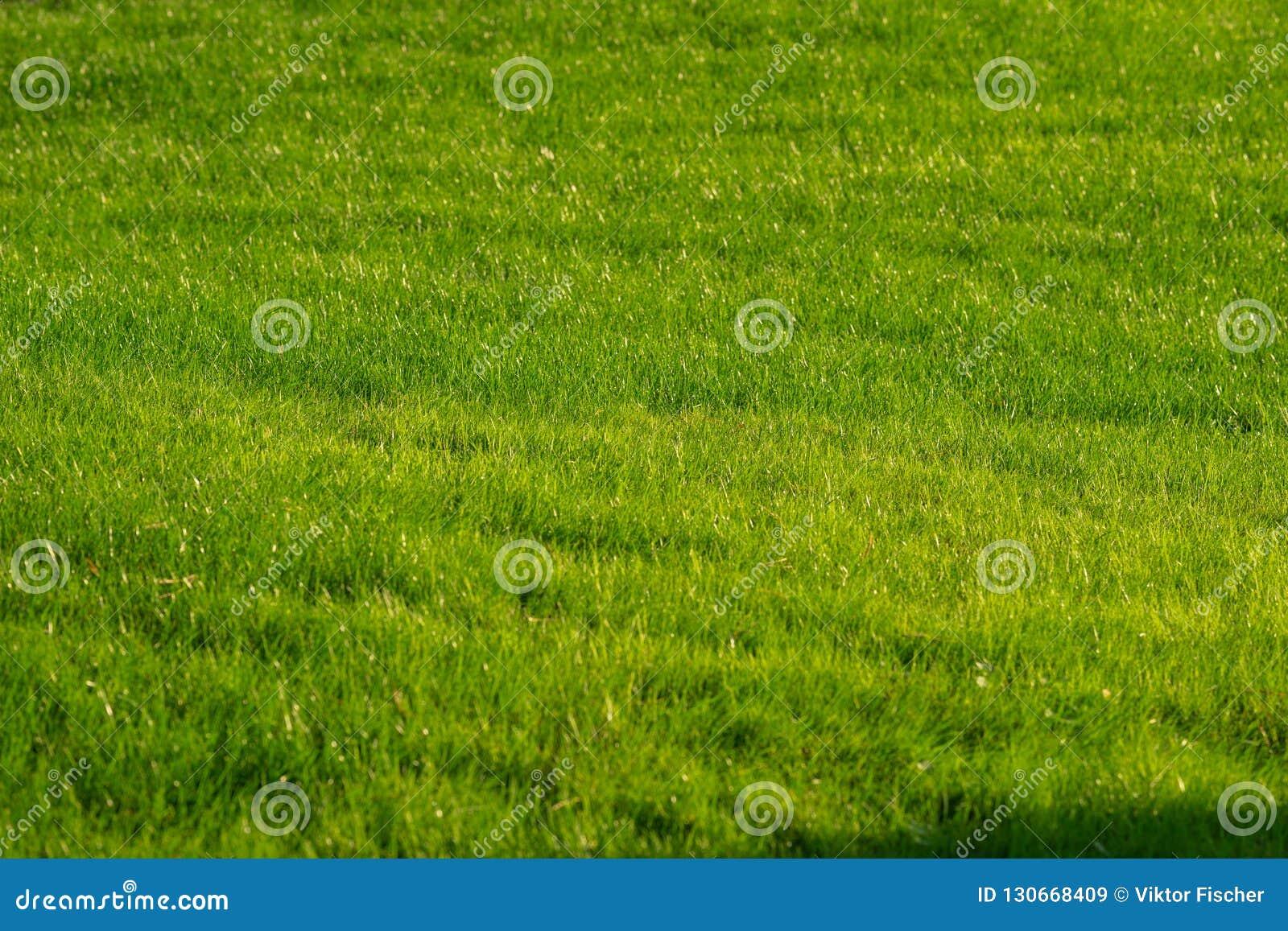 Jardin décoratif vert Paysage neutre avec un champ vert Arbre du paysage Park