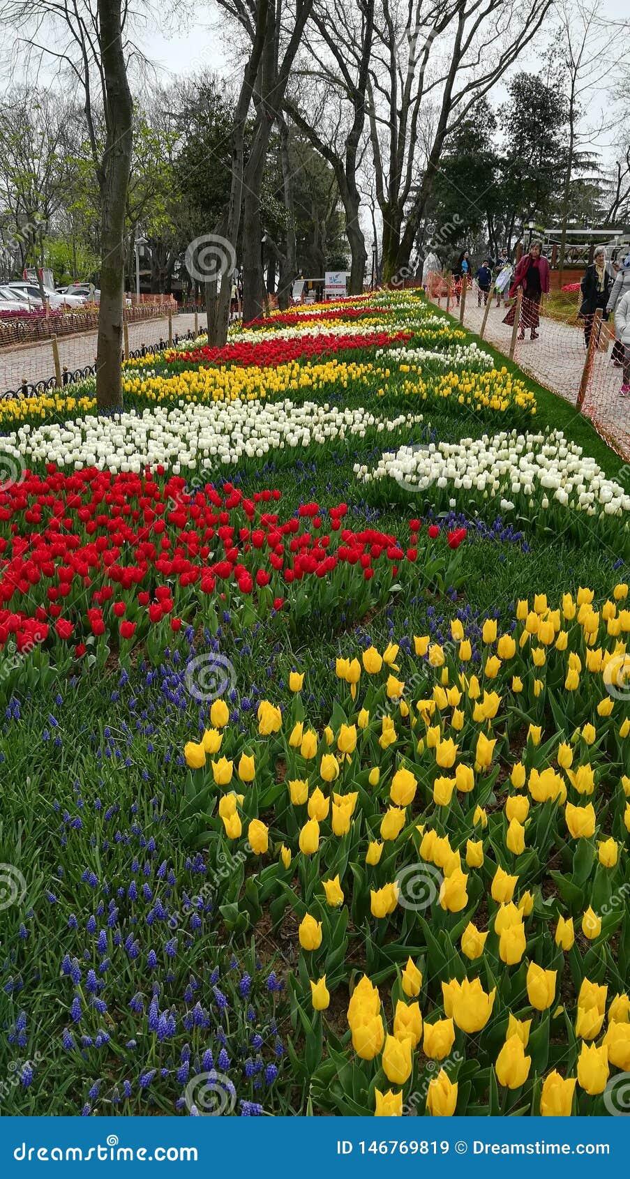Jardin d agrément en parc emirgyan, Istanbul, Turquie