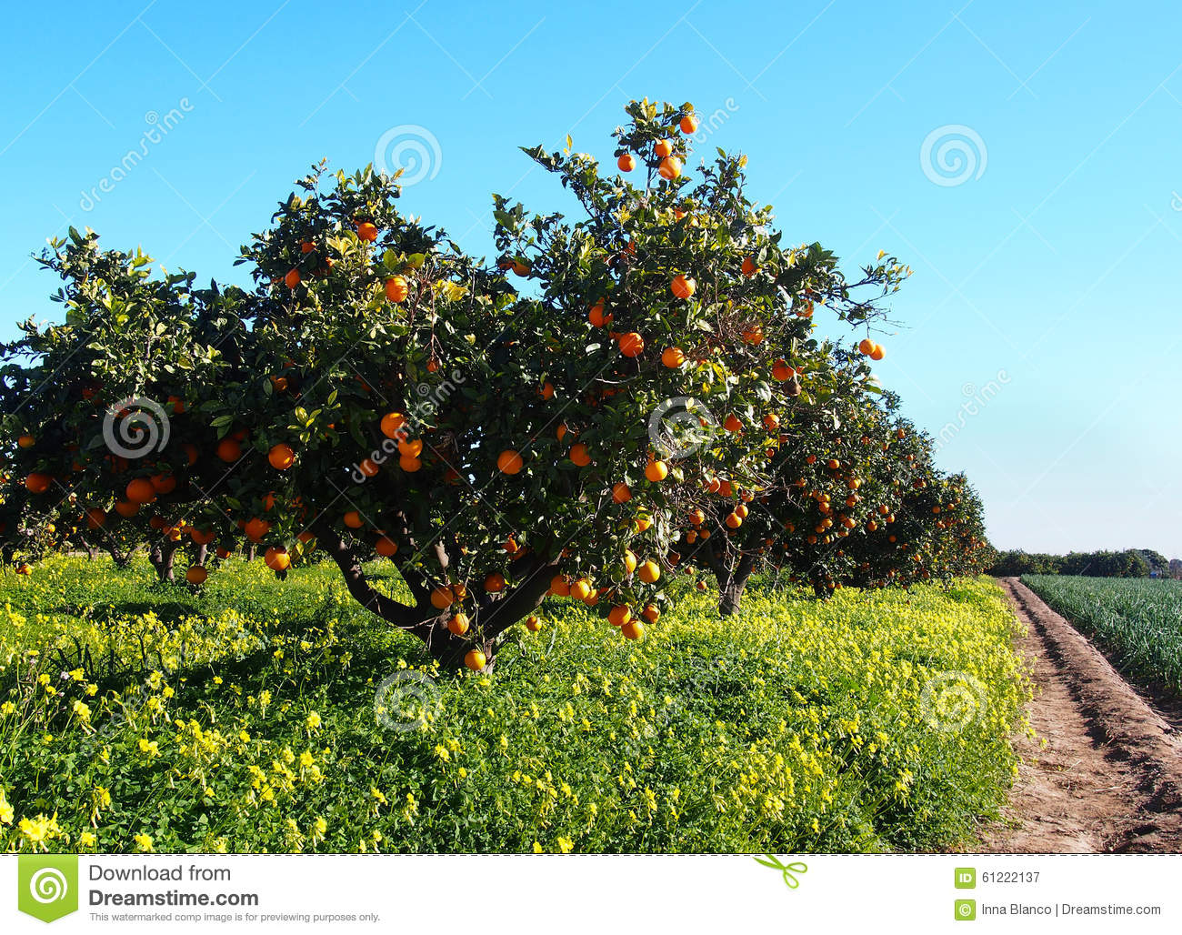 Jardin d 39 arbres oranges avec beaucoup de fruits photo for Les arbres du jardin