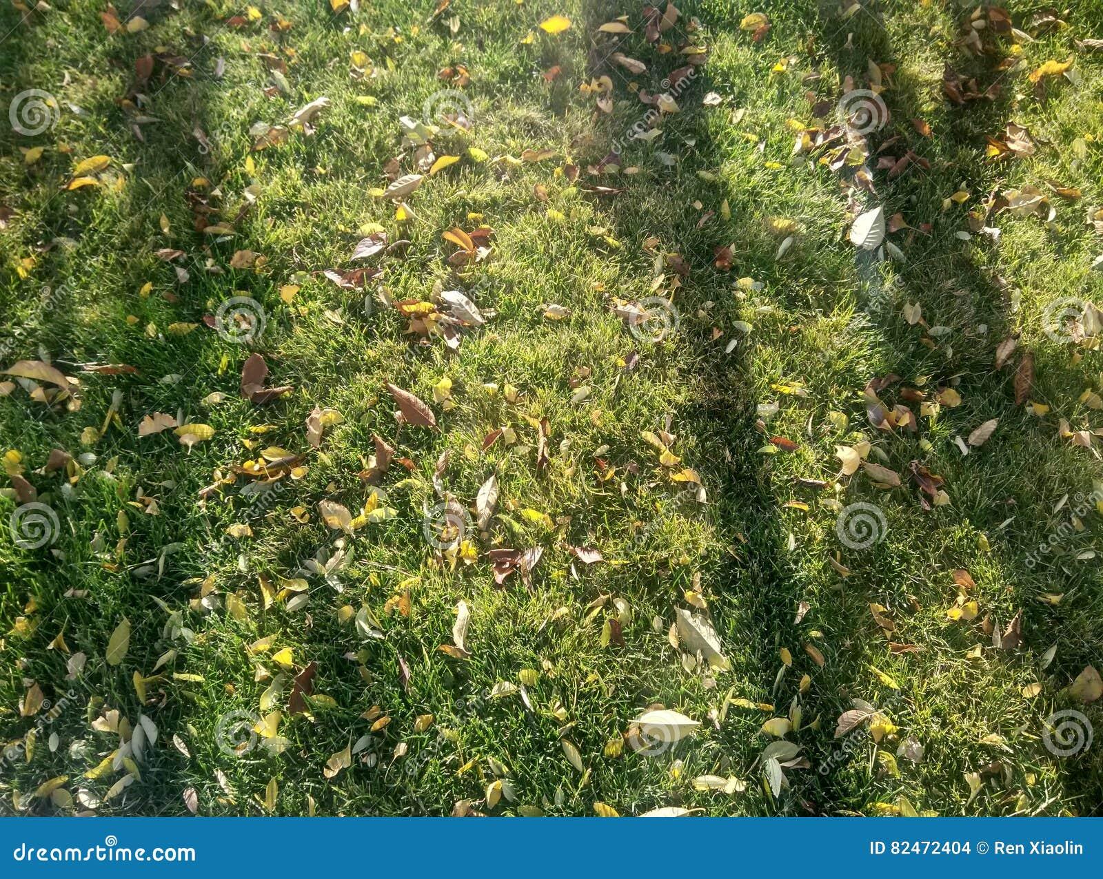 Jardin D\'automne De Lumière Et D\'ombre Photo stock - Image du ombre ...
