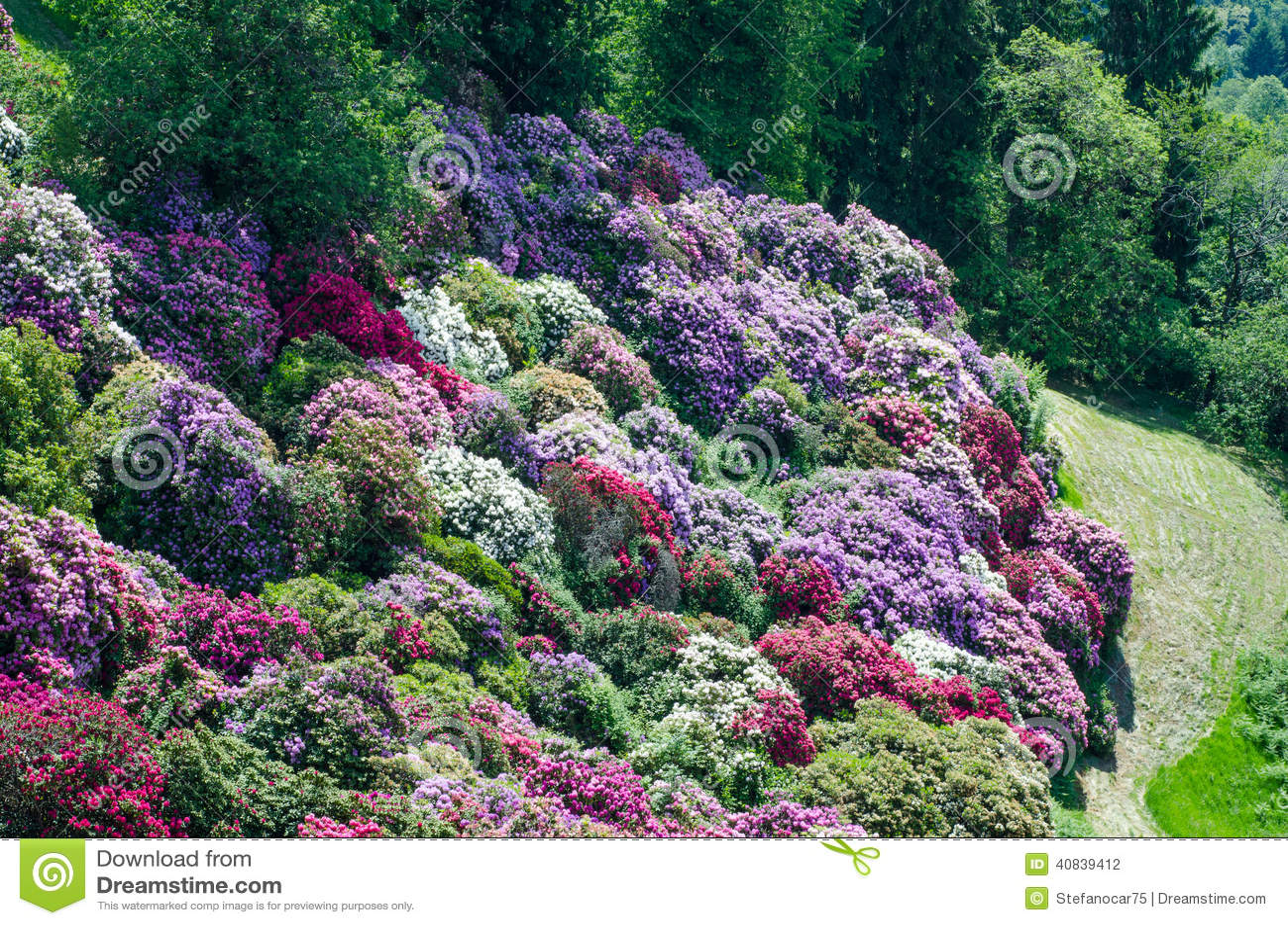Jardin d 39 azal e en italie photo stock image 40839412 - Jardin d italie chateauroux ...