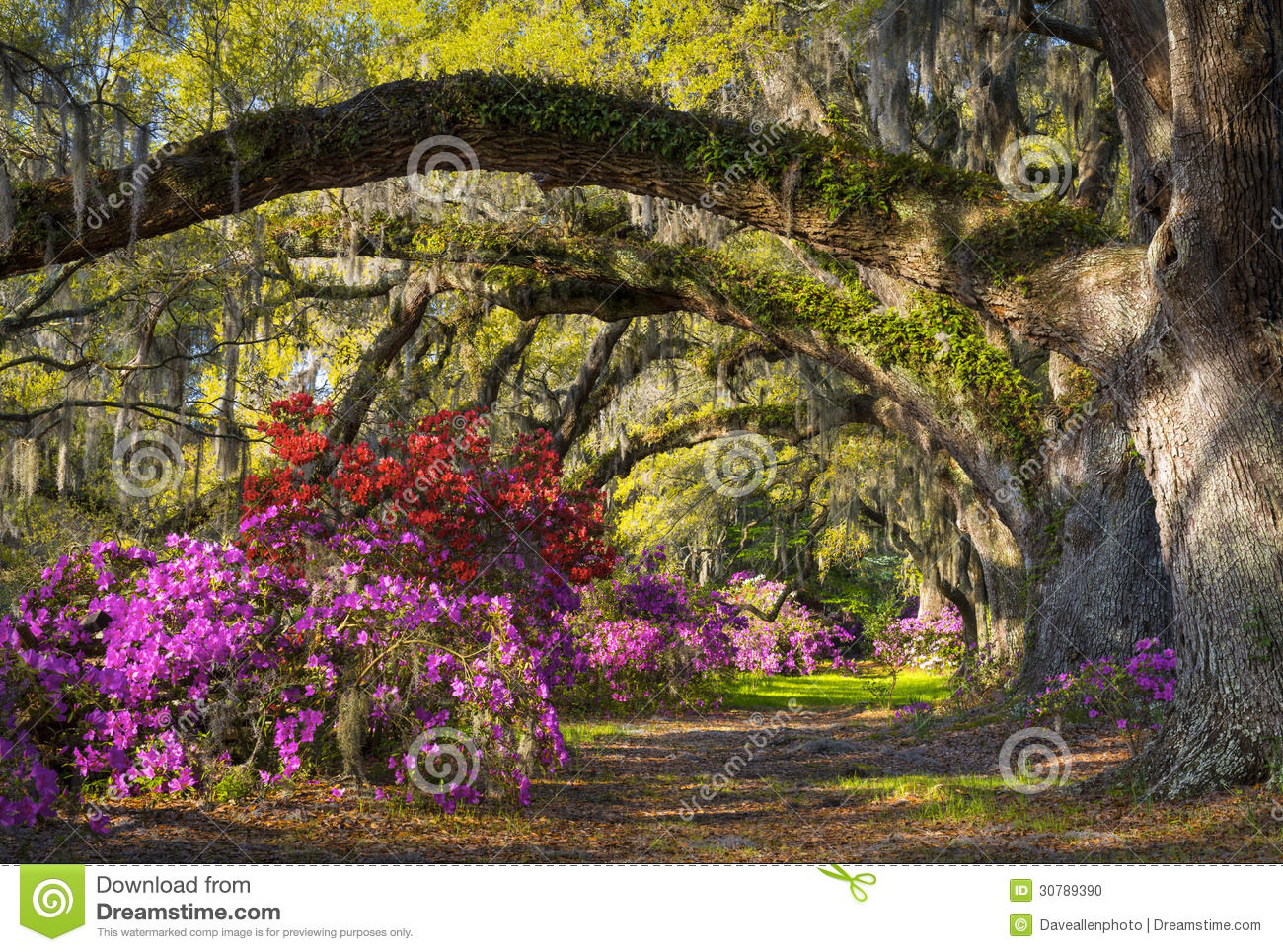 Jardin d 39 azalea flowers south carolina plantation de fleur de ressort de sc de charleston photo for Jardin plantation