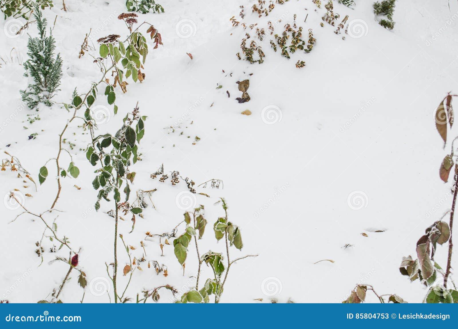 Jardin D\'hiver Avec Des Fleurs D\'usines Image stock - Image du ...