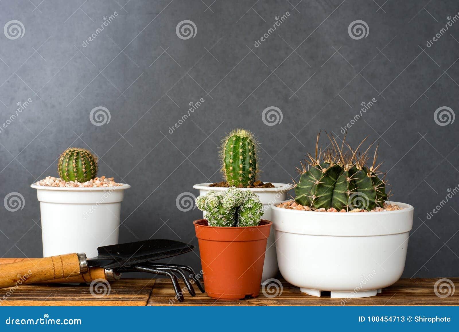 Jardin D Interieur Adorable De Cactus Image Stock Image Du Flore