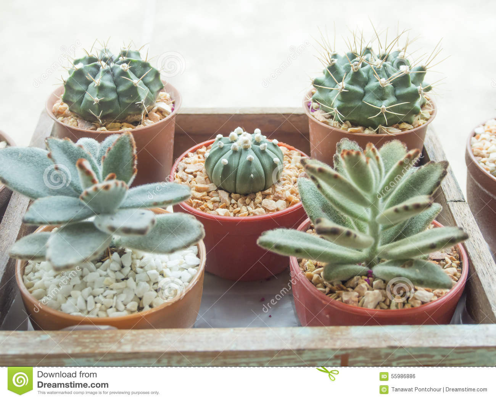 jardin d 39 int rieur de cactus photo stock image 55986886. Black Bedroom Furniture Sets. Home Design Ideas