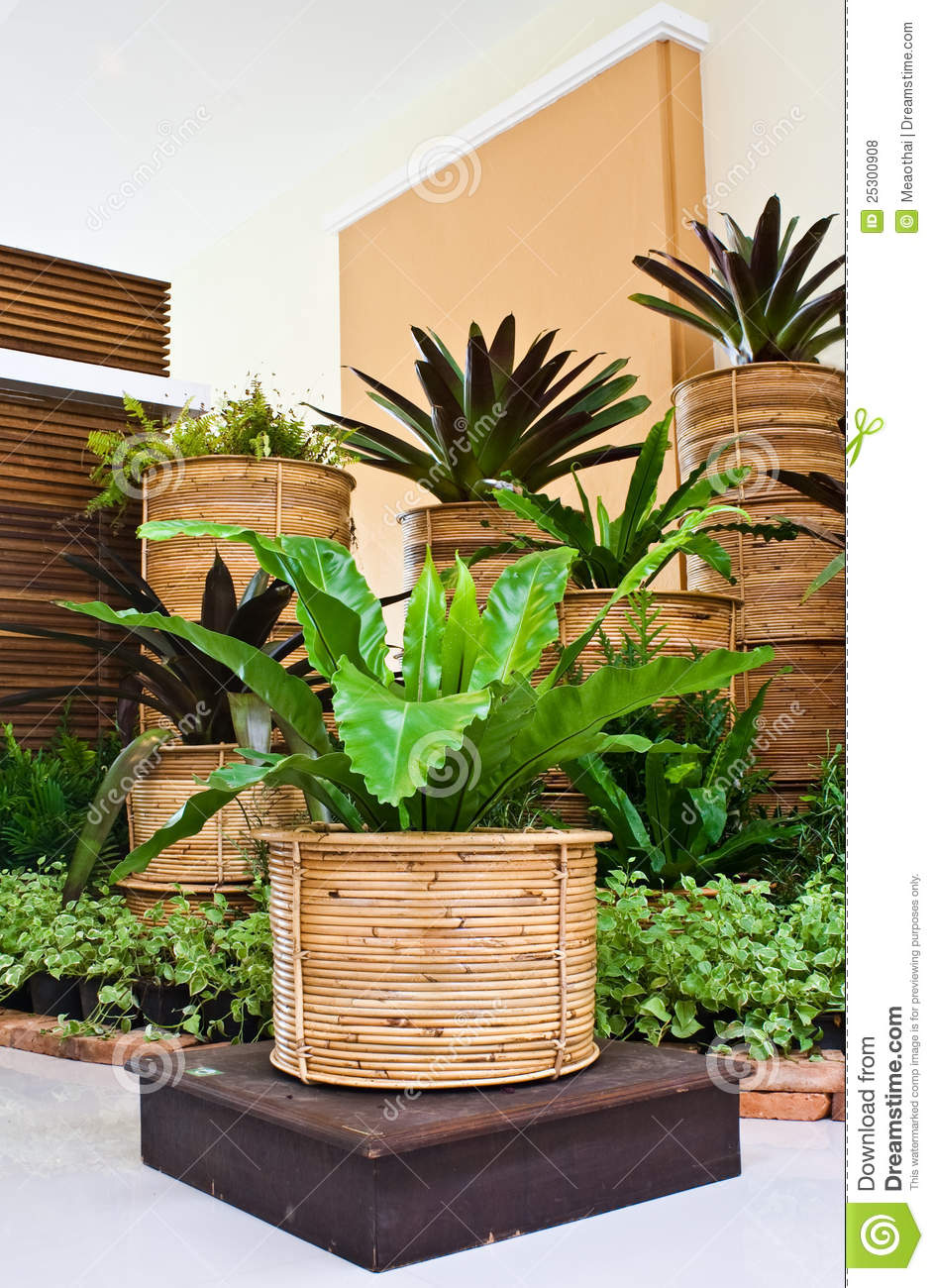 Jardin d int rieur de foug re pour la d coration de coin for Decoration jardin interieur