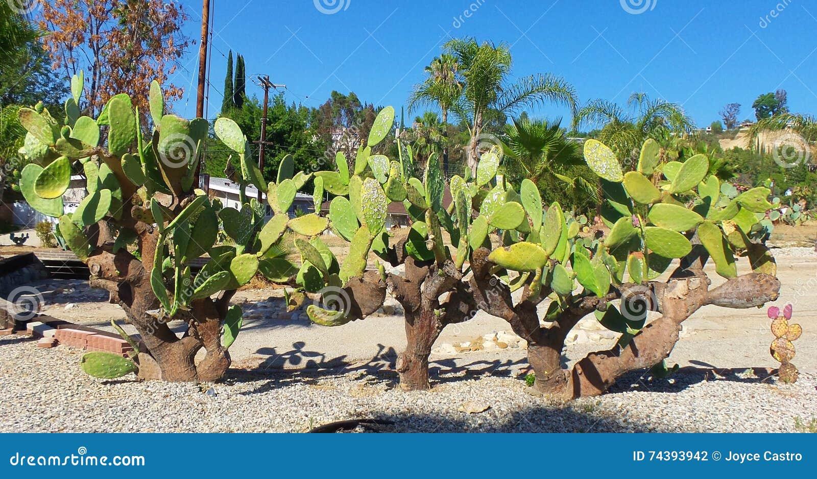 Jardin de cactus - conservation de l eau
