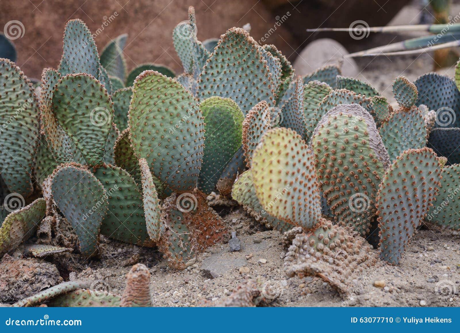 Download Jardin de cactus en parc photo stock. Image du variété - 63077710