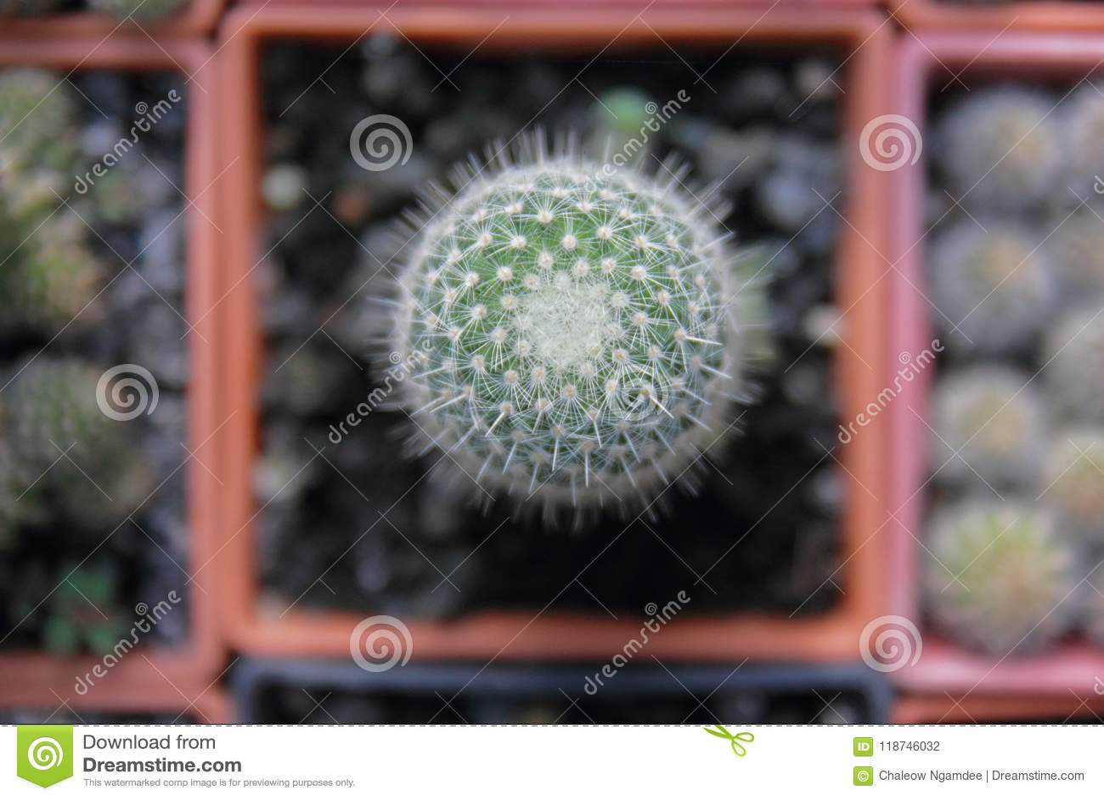 Jardin de cactus de vue supérieure, foyer central