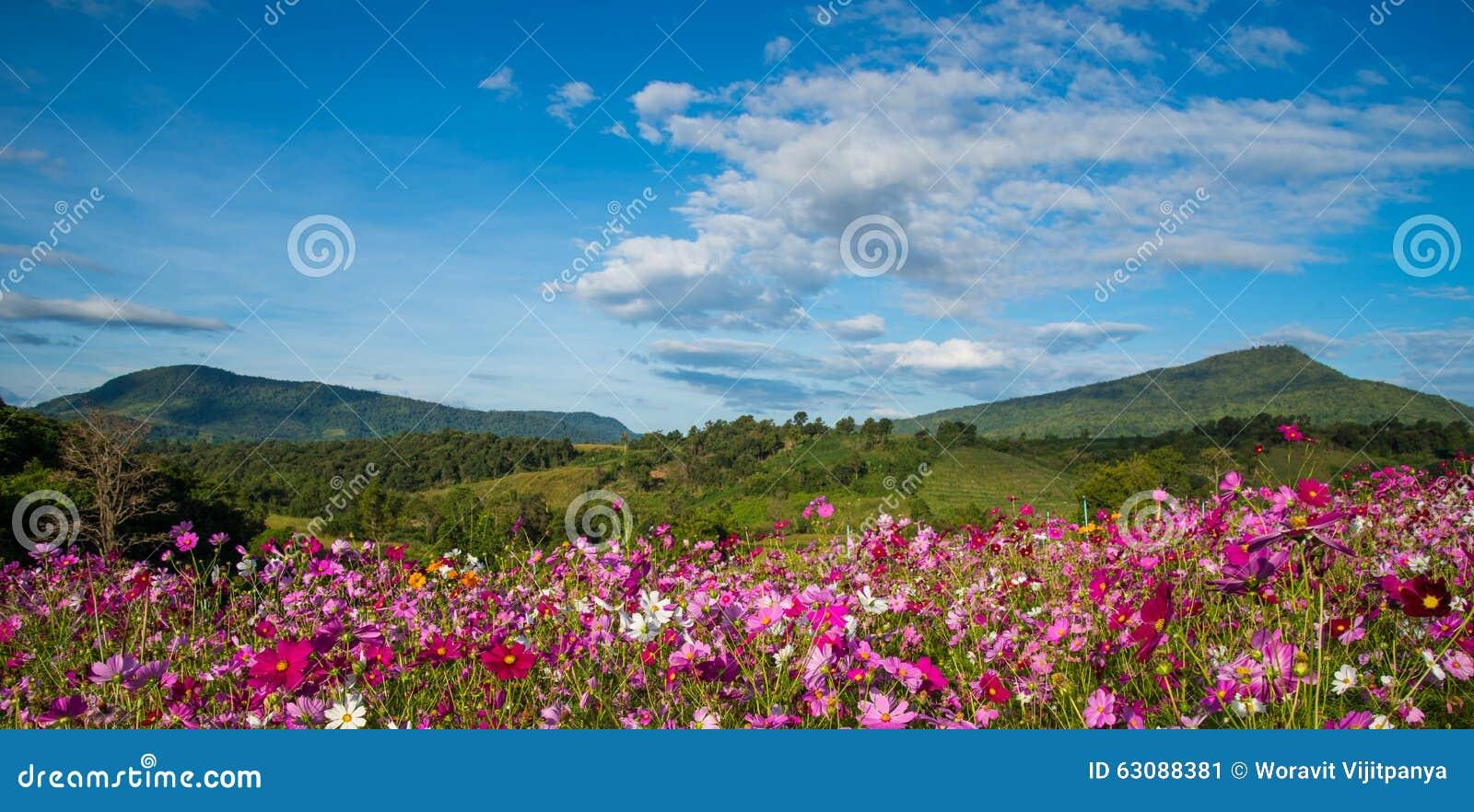 Download Jardin de cosmos de fleur image stock. Image du cordon - 63088381