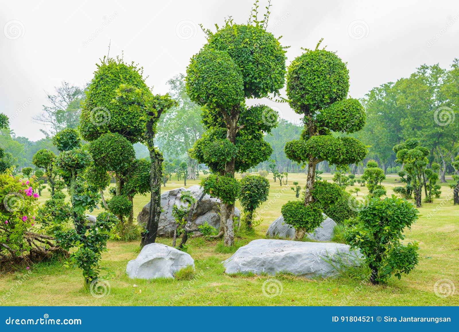 Jardin de d coration d 39 arbre de bonsa s de bois d 39 b ne - Jardin de bonsais ...