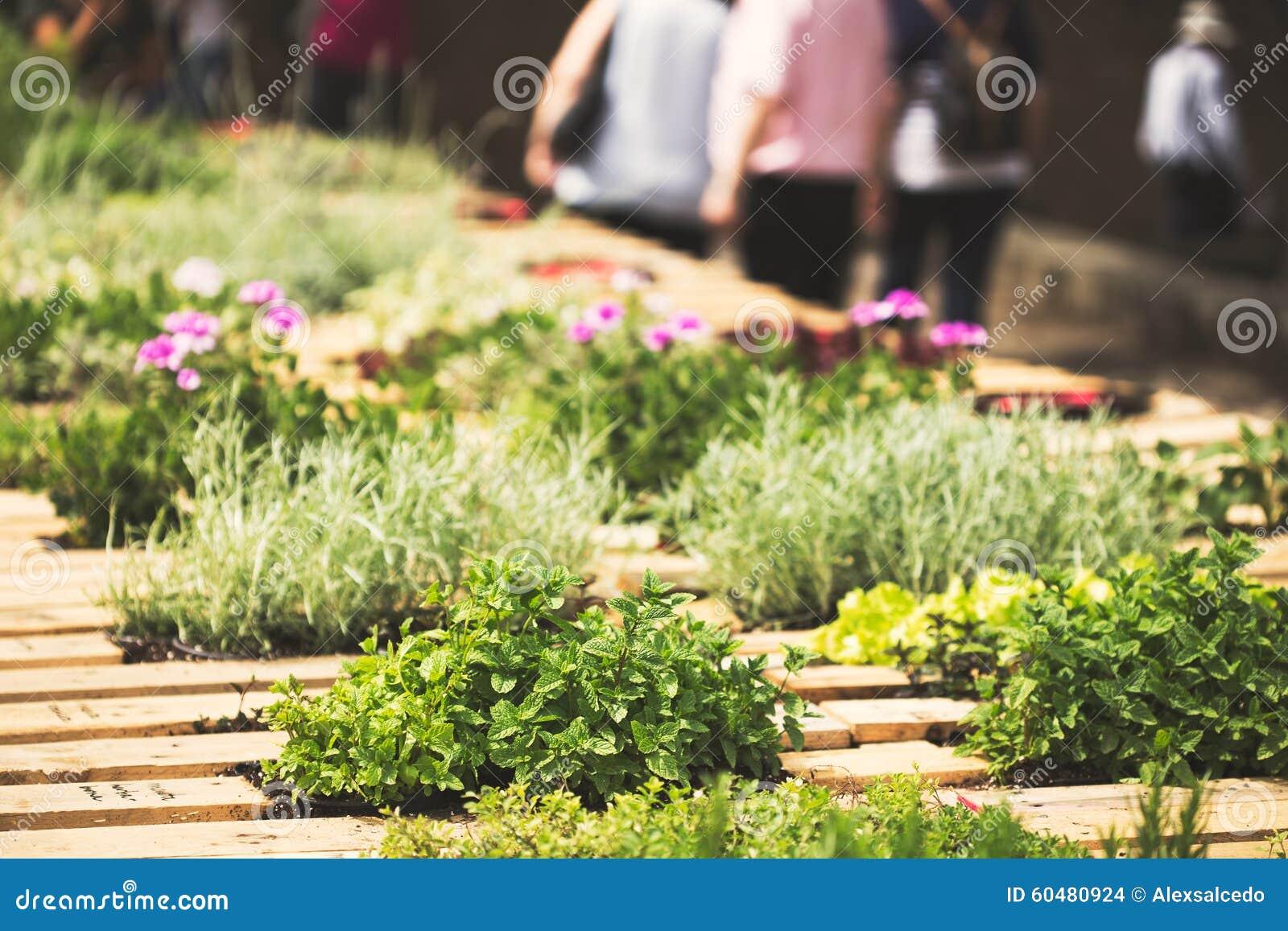 Jardin de fines herbes