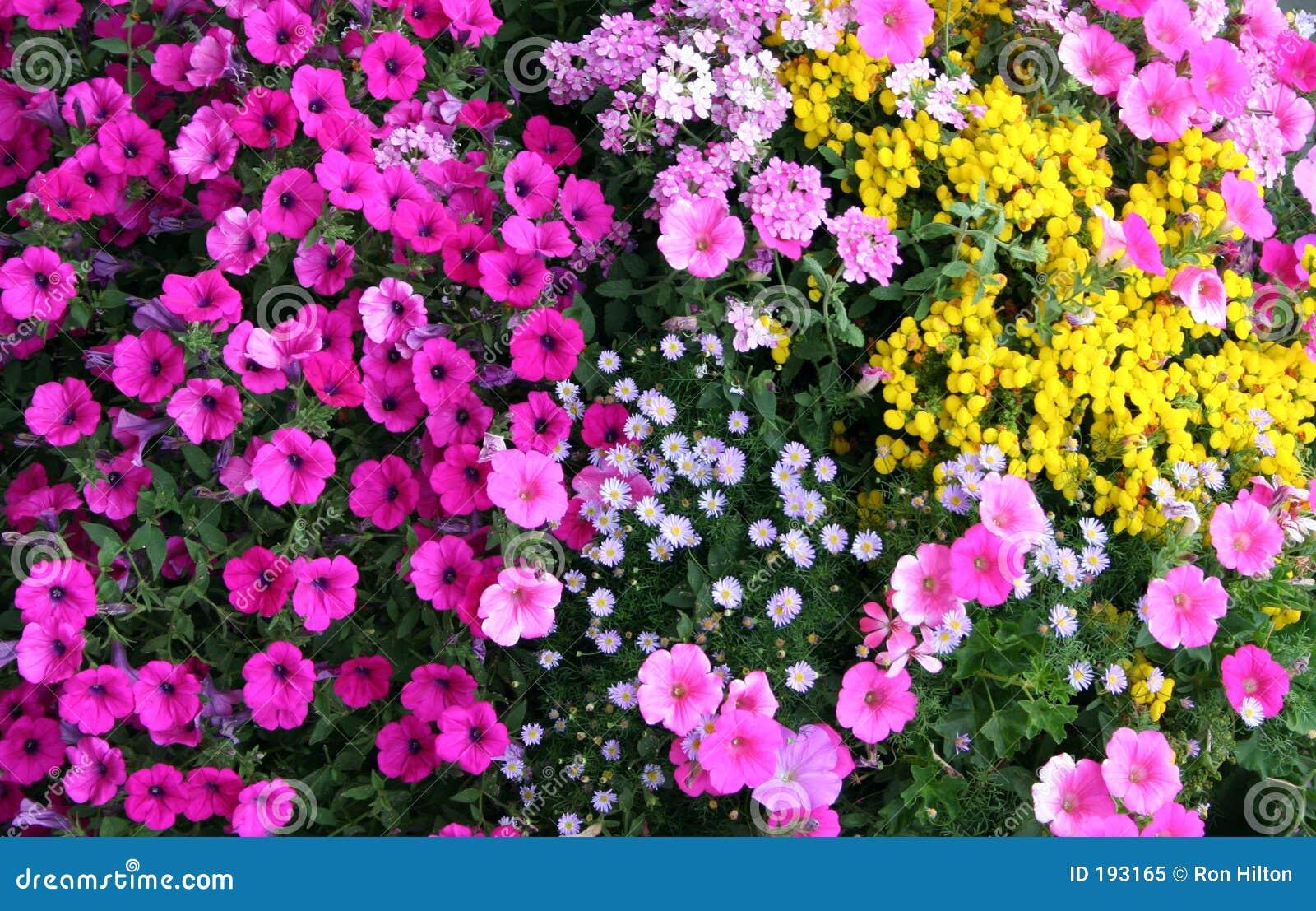 Jardin de fleur