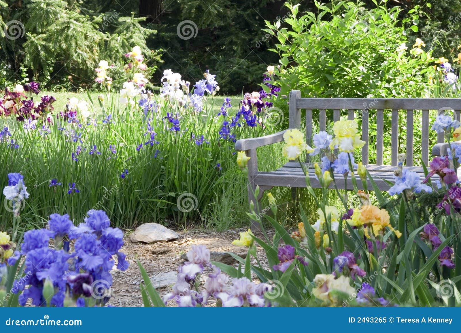 jardin de fleur photo libre de droits image 2493265. Black Bedroom Furniture Sets. Home Design Ideas