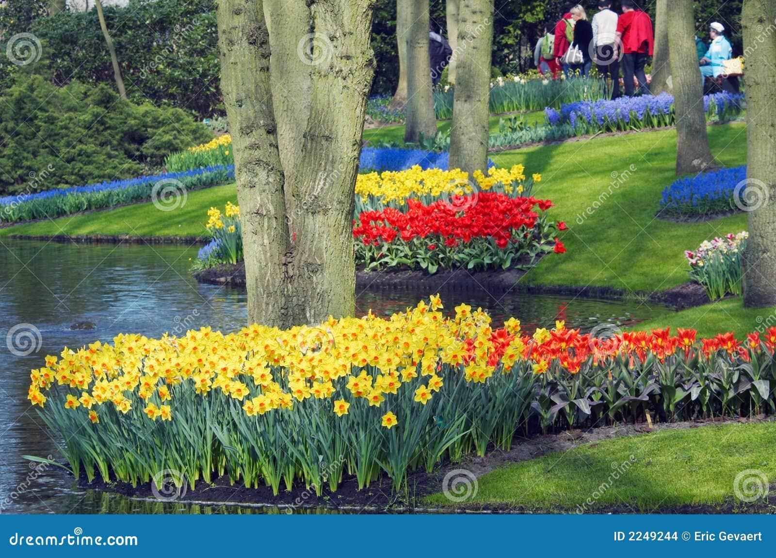 Jardin de fleur coloré