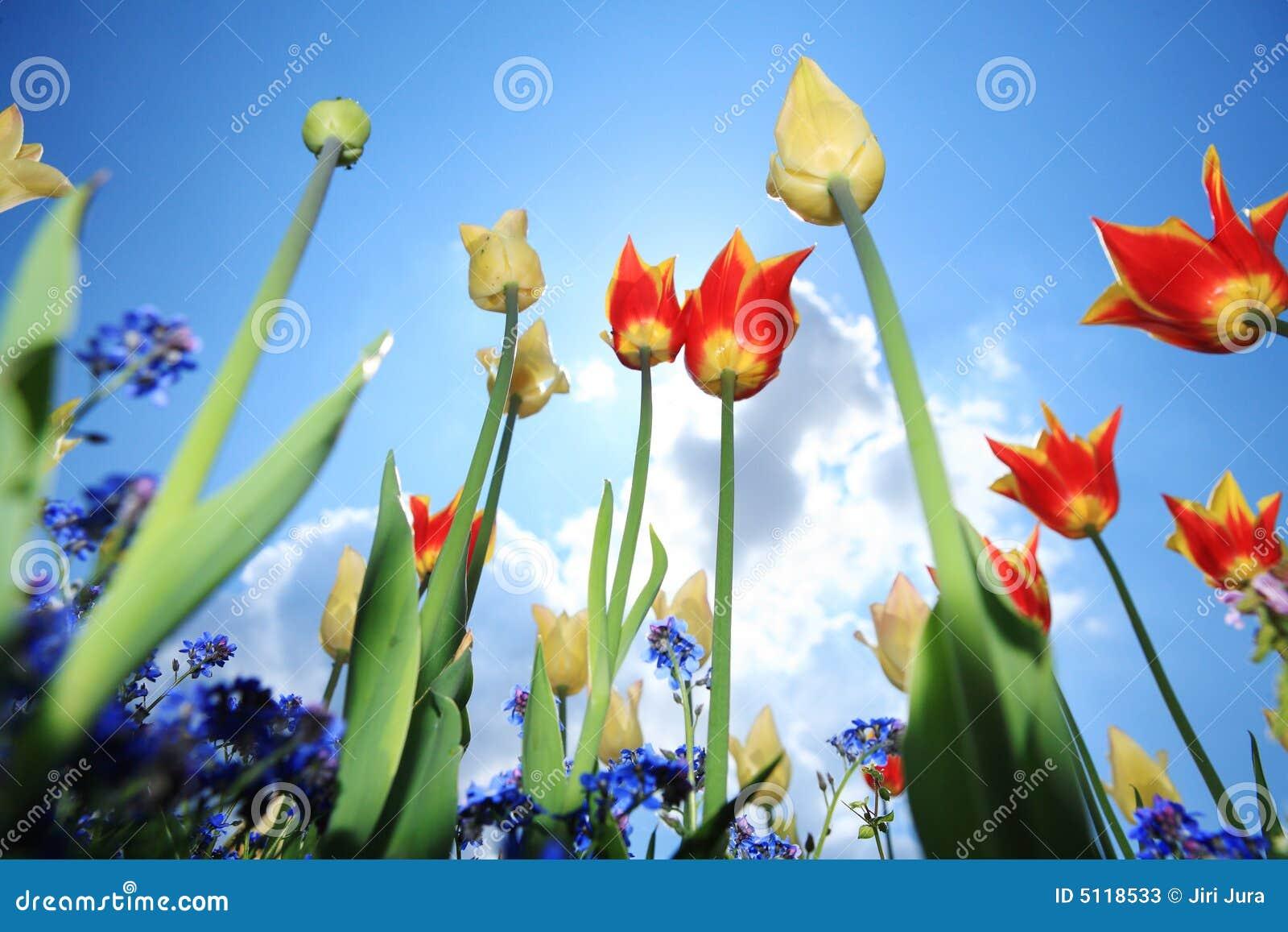 Jardin de fleur de tulipe image stock image du floral for Photos fleurs de jardin
