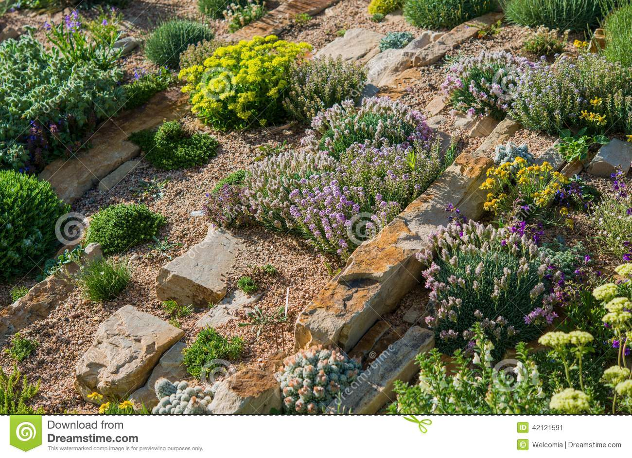 Jardin de jardin de rocaille photo stock image 42121591 for Jardin rocaille