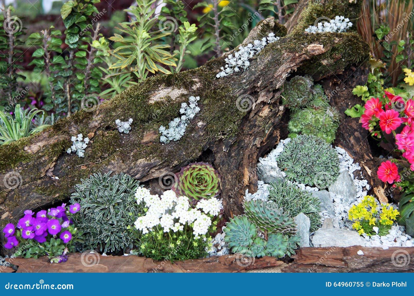 fabulous modeles de rocailles jardin rocaille jardin amenagement terrasse mini jardin de cactus avec amnagement jardin en pente douce with rocaille jardin