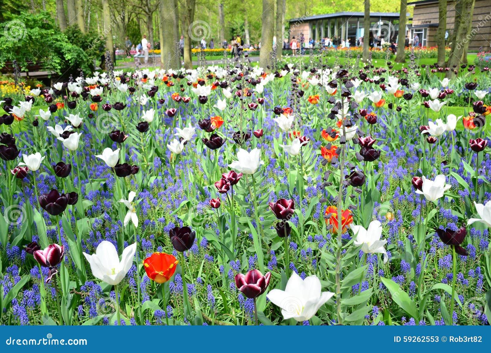 Jardin de keukenhof pays bas 10 mai fleurs et fleur for Jardin keukenhof