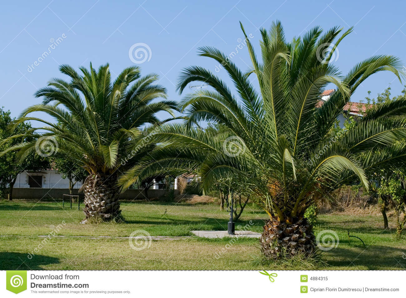 Jardin de palmier photo libre de droits image 4884315 for Decoration jardin avec palmier