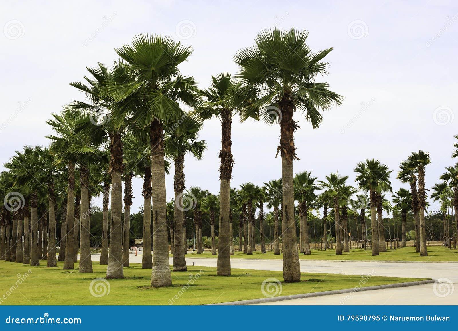jardin de palmier en parc photo stock image 79590795. Black Bedroom Furniture Sets. Home Design Ideas