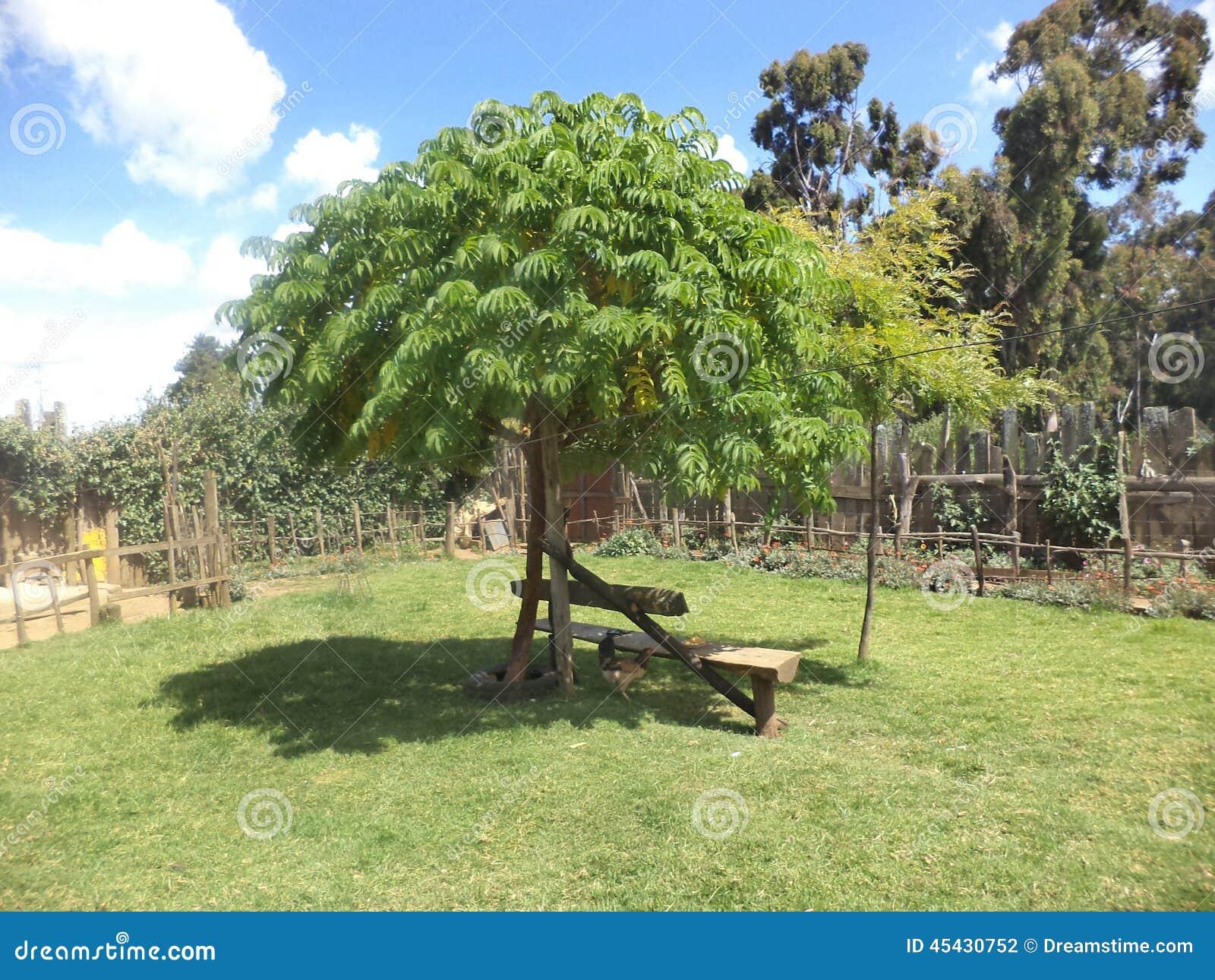 Arbre a bois dur for Paysage de jardin