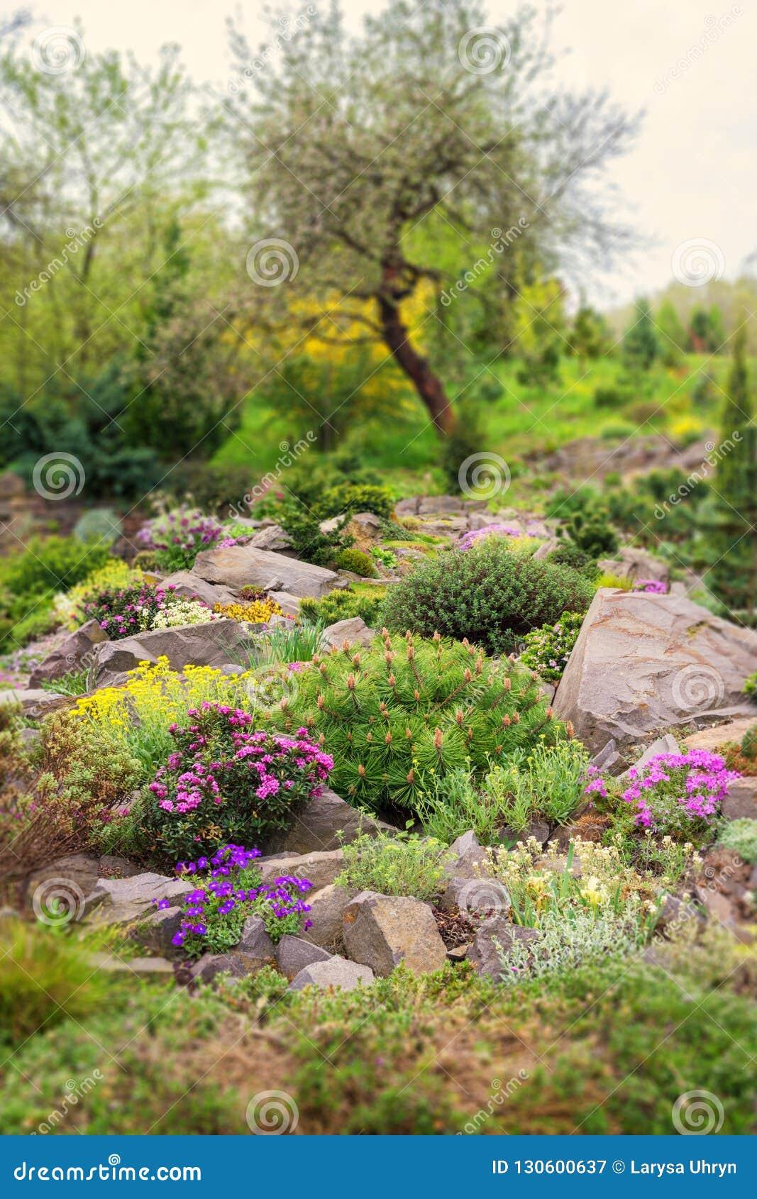 Jardin De Rocaille Dans Le Jardin Avec Des Pierres Et La Variété De ...