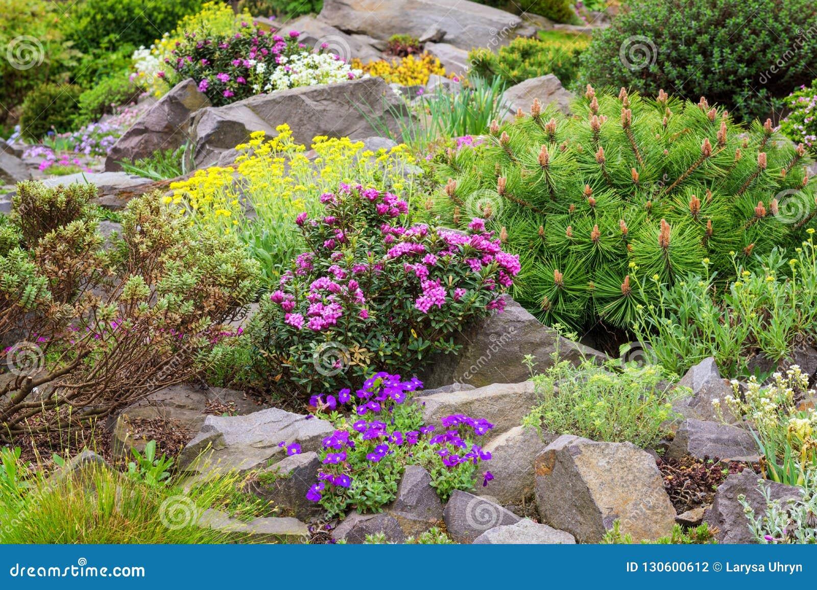 Jardin De Rocaille Dans Le Jardin Avec La Variété De ...