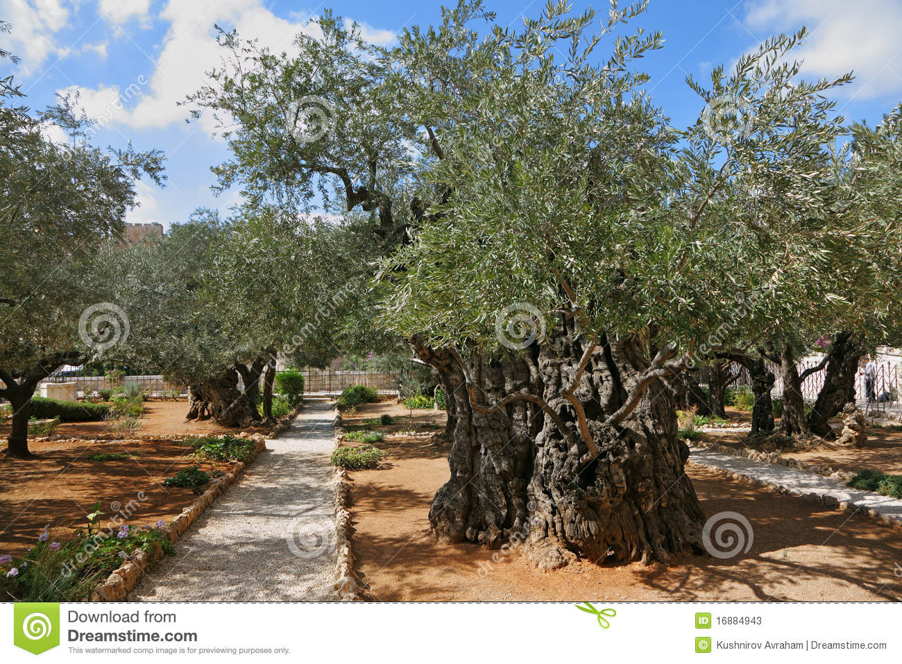 Jardin des oliviers de gethsemane thousand year photos for Jardin olivier