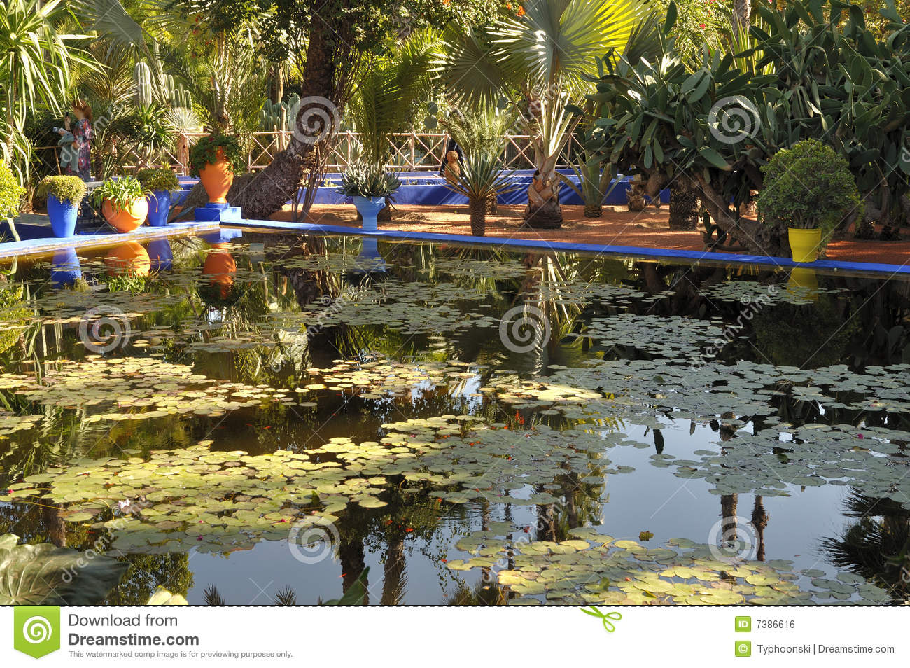 Jardin Majorelle In Marrakech Stock Photo Image Of Lilly Pond