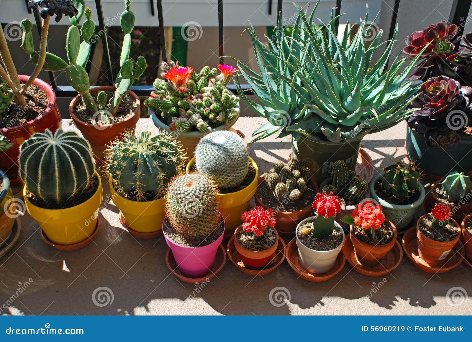 jardin mis en pot de cactus sur un passage couvert niveau. Black Bedroom Furniture Sets. Home Design Ideas