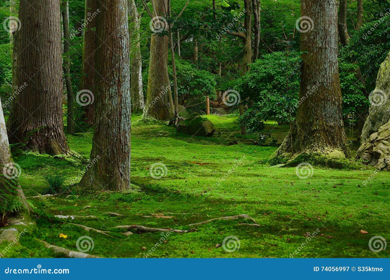 Jardin mousse et arbres japonais kyoto japon image stock for Arbres jardin japonais
